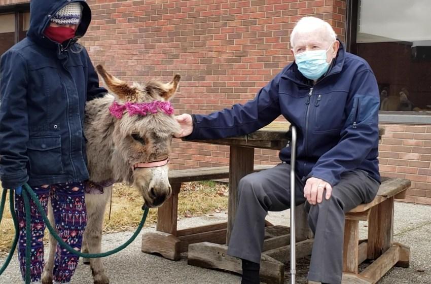 Club offers pony walks for seniors