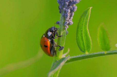 Conservation of insects discussed at SACPA