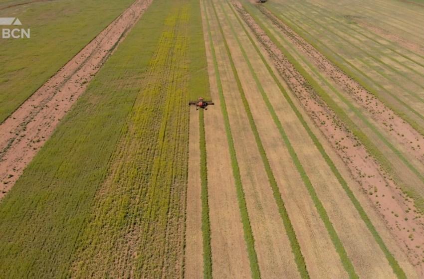 Record highs in Alberta grain prices