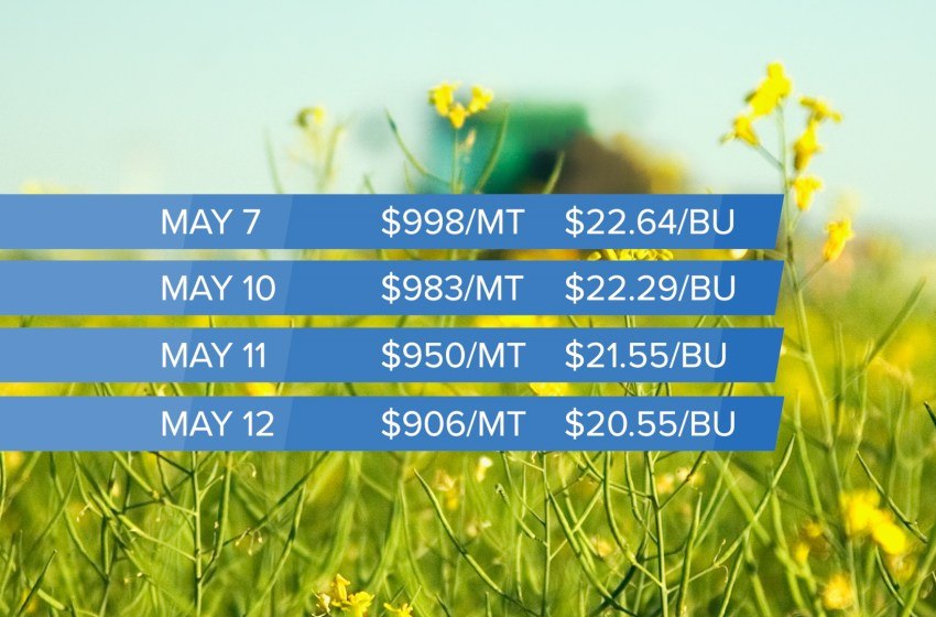 Canola exceeds its smoking point with record prices