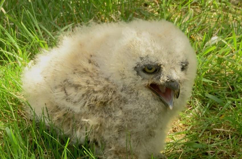 Alberta Birds of Prey Centre soars into new season