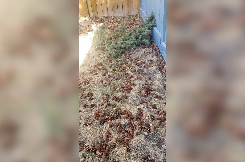 Man hires lawn care company that results in scam