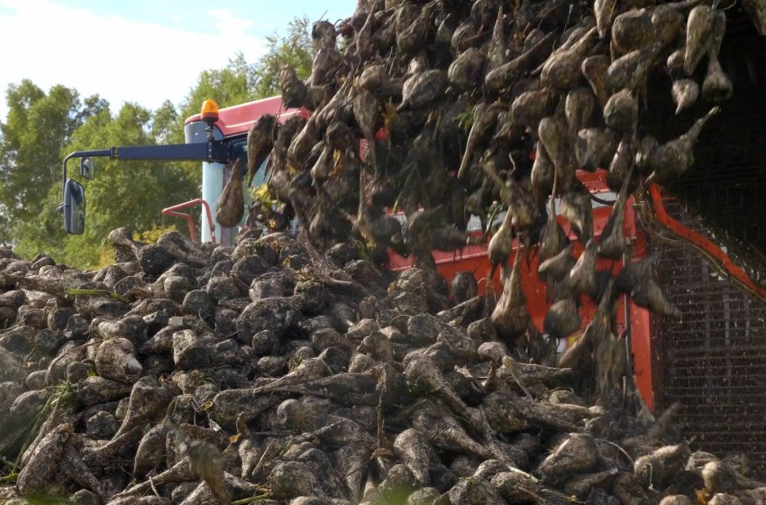 LC receives funds for sugar beet research