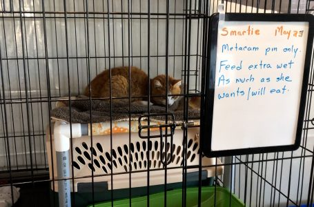 Cat rescue shelter responds to cat bylaw proposal