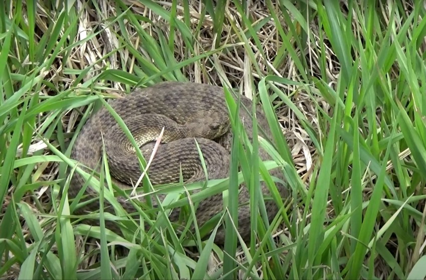 Rattlesnake safety while exploring the coulees this summer