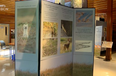 Helen Schuler Nature Centre reopens with two new exhibits