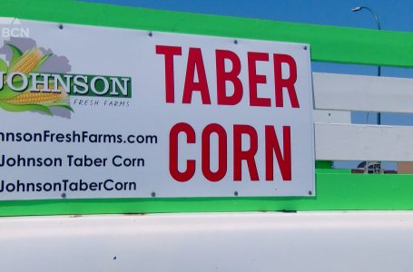 Taber corn stands now open in southern Alberta