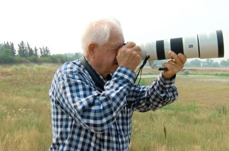 Town of Coaldale ordered to fix incorrect wildlife signage