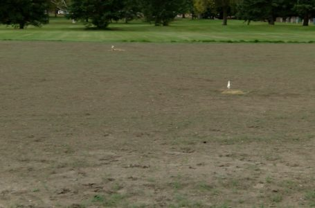 Naturalization pilot project for Lethbridge parks