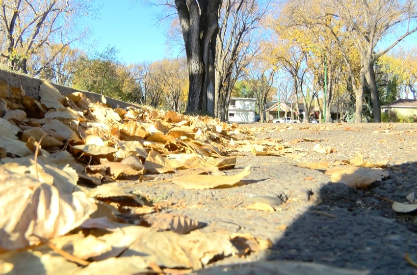 Reminder of fall yard, house preparations as temperatures start to drop